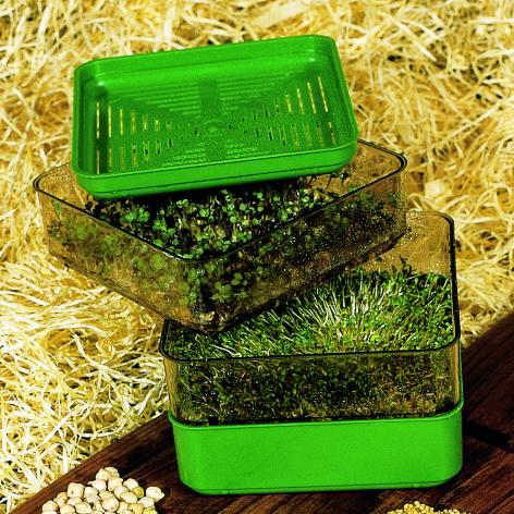 Bergs Bio-Salad