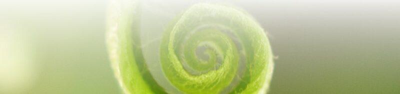 spirale verte bas